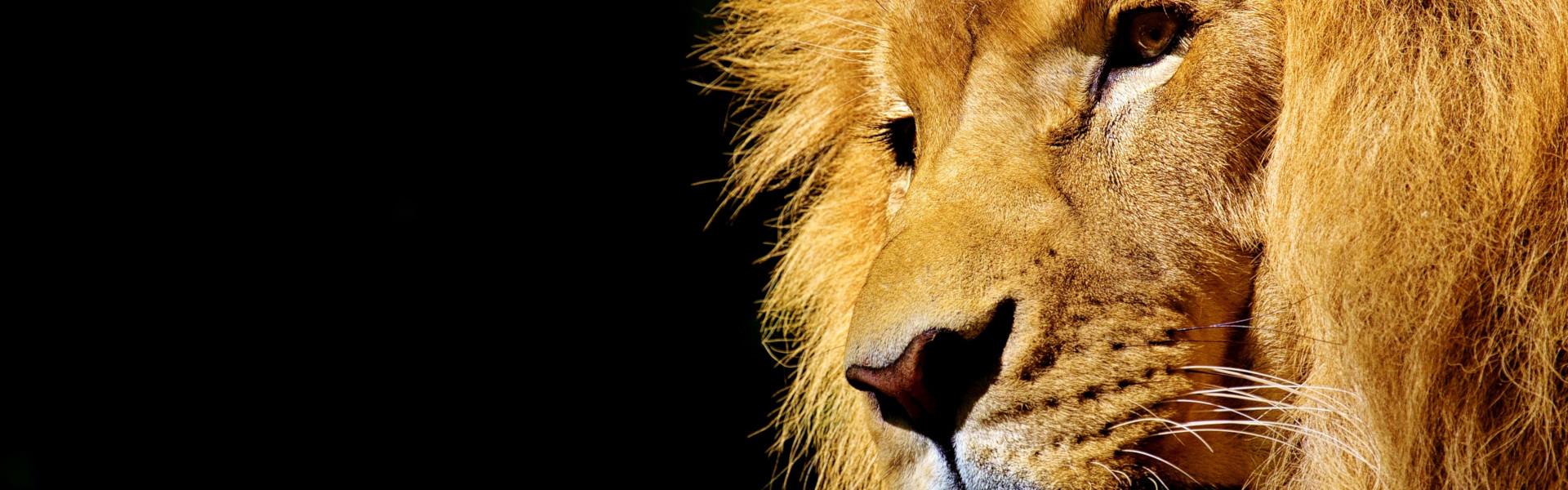 Mietwagenreisen Südafrika - Tier-Reisen