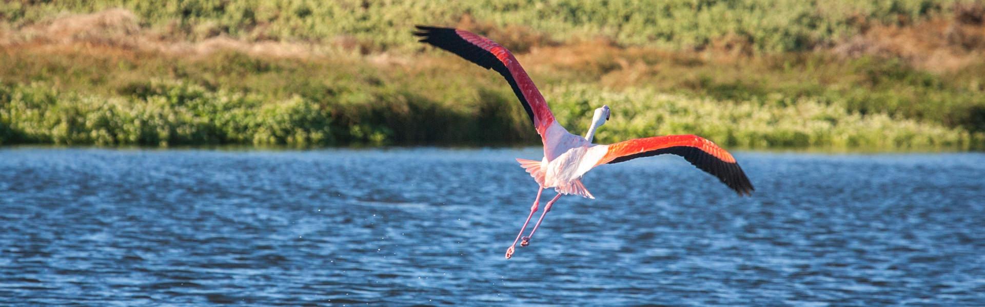 Mietwagenreisen Südafrika - Natur-Reisen