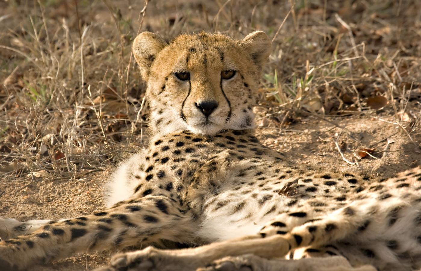 Südafrika & Swaziland - Natur & Tiere intensiv