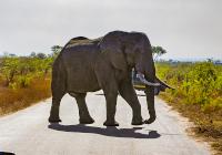 Südafrika Mietwagenreise - Südafrika Family-Tour